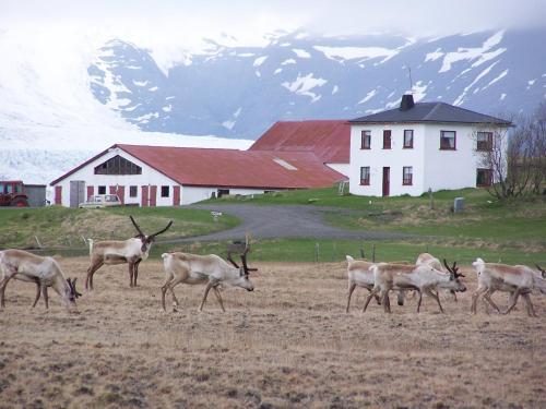 Guesthouse Holmur - Accommodation - Hólmur