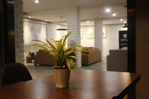Фото отеля Salad Days Inn