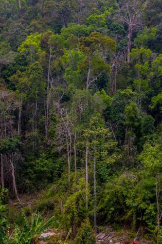 Kirirom National Park, Kampong Speu Province, Cambodia.