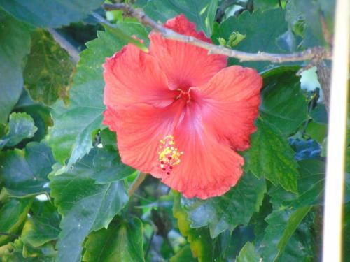 Aloha AKU - Bamboo 1 - Kihei, HI 96753