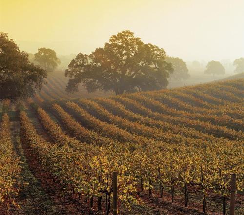 Best Western Plus Victorian Inn - Monterey, CA CA 93940