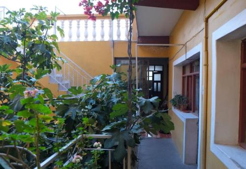 Homestay Jorge Sucre