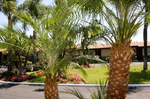 Palm Tropics Motel