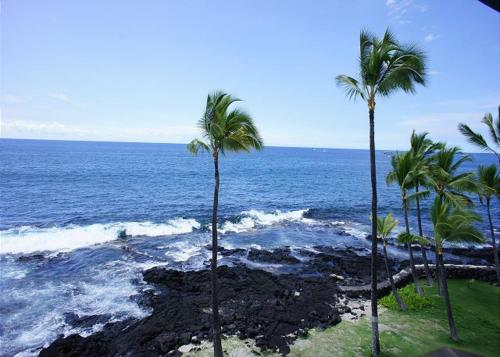 Kona Reef D37 - Kailua Kona, HI 96740