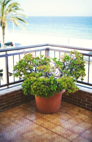 Hotel Miramar Badalona photo 30