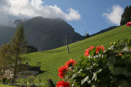 Haus Bergkristall - Accommodation - Berwang
