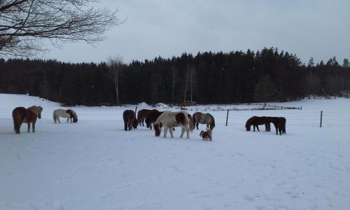 Haus der Pferde