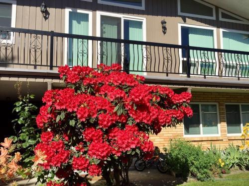Perfect One Bedroom Suite with Garden View Główne zdjęcie