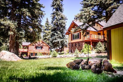 Alpen Way Chalet Mountain Lodge - Accommodation - Evergreen