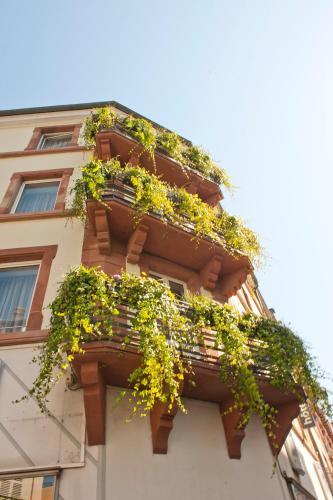Hôtel le Grillon - Hôtel - Strasbourg
