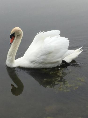 Swan Song Inn