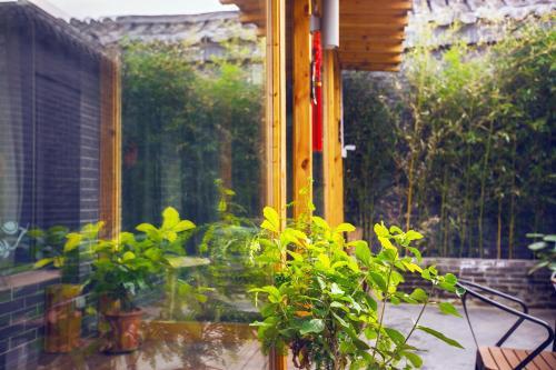 Walnut Tree Courtyard Peking photo 65