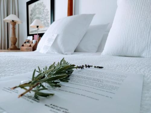 Suite B Bou Hotel Cortijo Bravo 9