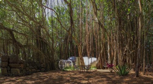 Ile aux Cerfs, Trou d'Eau Douce, Mauritius.