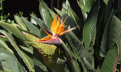 Kalua Koi Villas 2222 - Maunaloa, HI 96770
