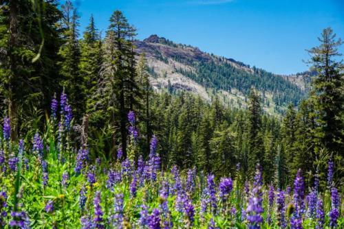 Base Camp 20 - Kirkwood, CA 95646