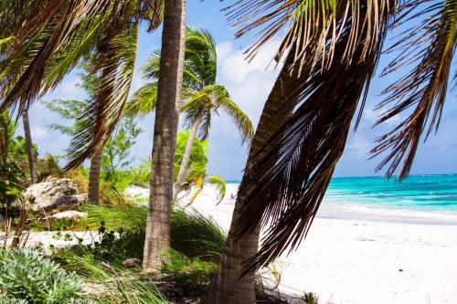 . Coral Beachside