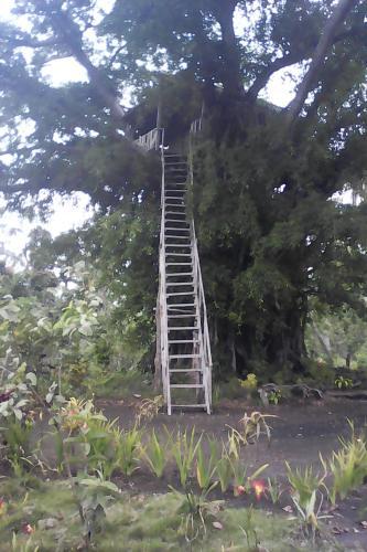 Volcano Horizon Tree House (B&B)