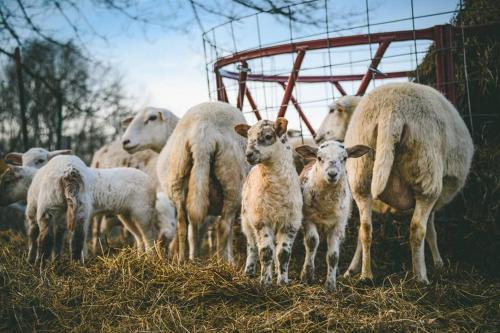 Woodstock Sustainable Farms - Woodstock, CT 06281