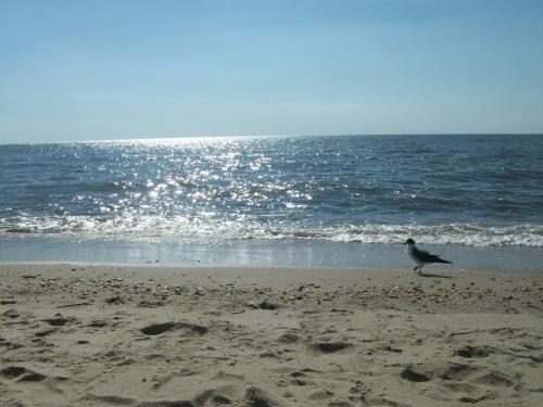 Boardwalk Beach Inn - Point Pleasant Beach, NJ 08742
