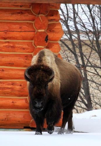 The Roosevelt Hotel - Yellowstone - Gardiner, MT 59030