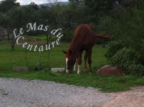 . Le Mas du Centaure