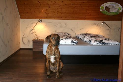Hotel-overnachting met je hond in Ferienwohnung Schlossblick Schillingsfürst - Diebach