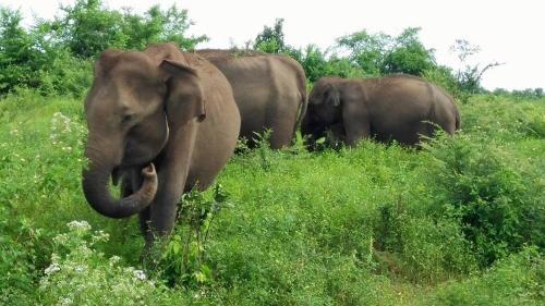 Pet Friendly Vacation Rentals in Embilipitiya Sri Lanka