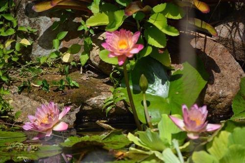 El Yunque Rainforest Inn,