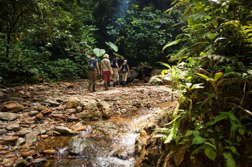 Reserva Privada Mashpi, Mashpi 150150, Ecuador.