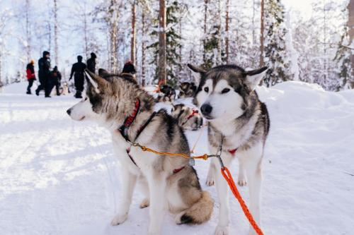 Tutkijantie 28, FI 96900 Rovaniemi, Lapland, Finland.