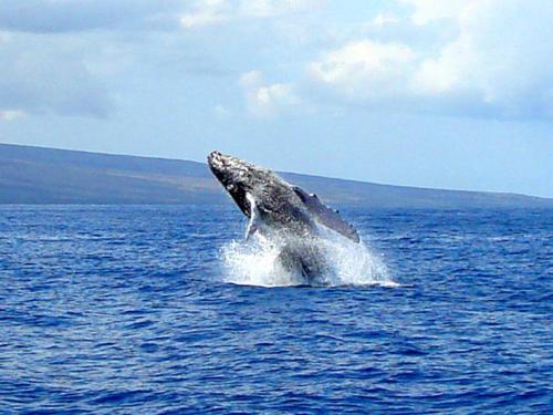 Kihei Bay Surf #226 Condo - Kihei, HI 96753