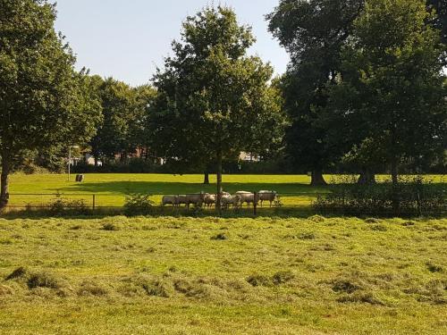 Natuurlijk Aan De Es, Ferienwohnung in Havelte bei Giethoorn