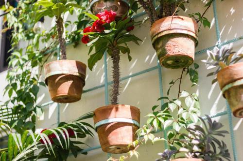 San Tropico Petit Hotel & Peaceful Escape