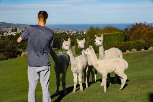 Alpaca Farmstay - Dunedin