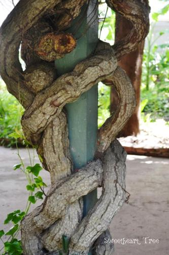 Sweetheart Tree Homestay photo 29