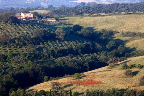 Località Sterpeti 6, Km. 4.250, 58051 Magliano in Toscana GR, Italy.