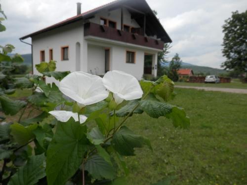 Guesthouse Matija