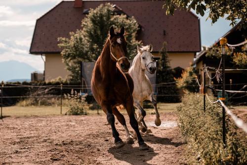 Urlaub für Mensch und Tier - Appartements Pirkhof, Pension in Pörtschach am Wörthersee