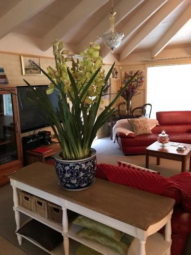 Holly Cottage - Apartment - Olinda