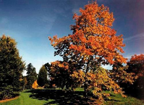 West Lodge Park photo 4