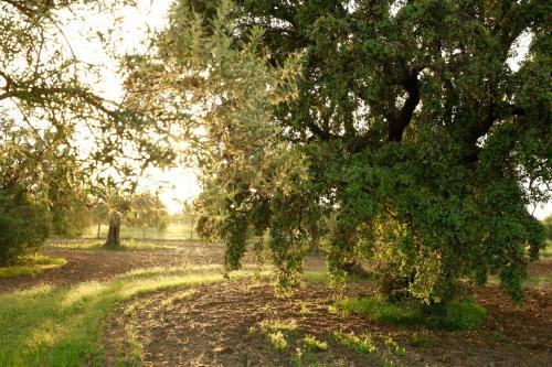 Estiramentens, Santo Estavao, Tavira, 8800-504, Algarve, Portugal.