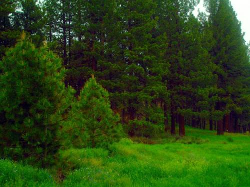 Sleepy Pines Motel - Portola, CA 96122