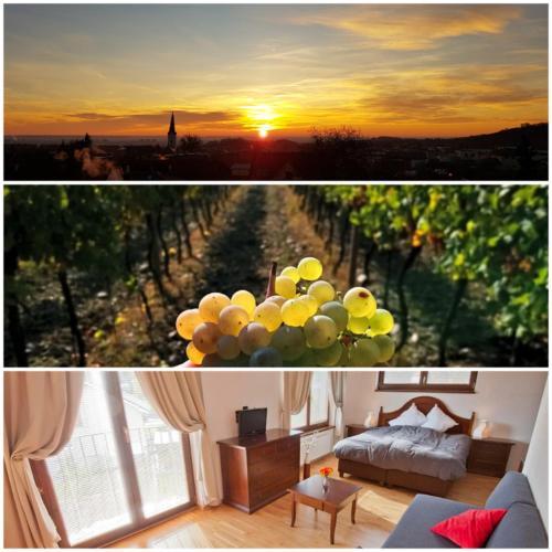 Villa Vinica - Accommodation - Limbach