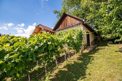 Vineyard Cottage Pod Piramido - Hotel - Dobrnič