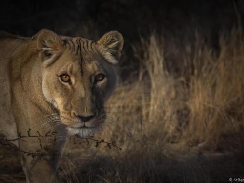 . Aloegrove Safari Lodge