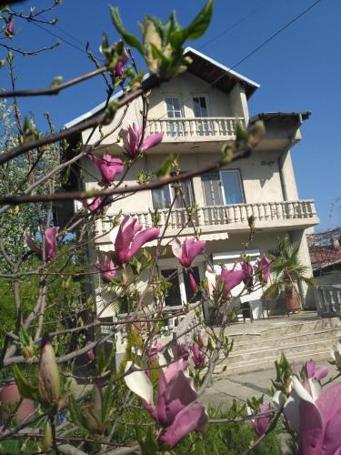 Villa Nova - Accommodation - Bucharest