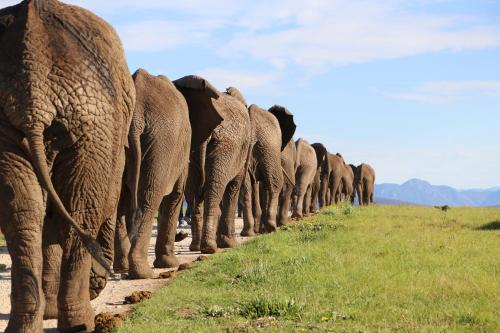 . Knysna Elephant Park Lodge