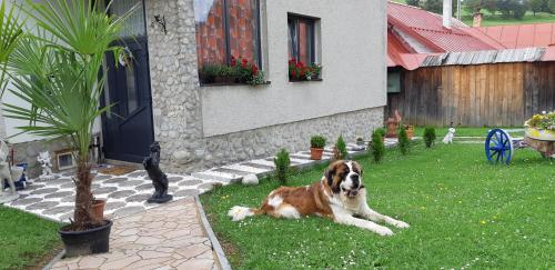 Privat Sofia - Accommodation - ?diar