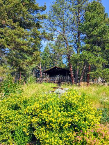 The Chocolate Moose Cabins - Clancy, MT 59634